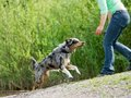 1399570_australian_shepherd_playing-120x90.jpg